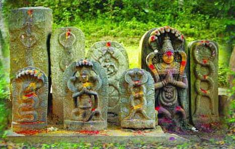 Story - Pooja of Nag Panchami Dedicated to Snakes
