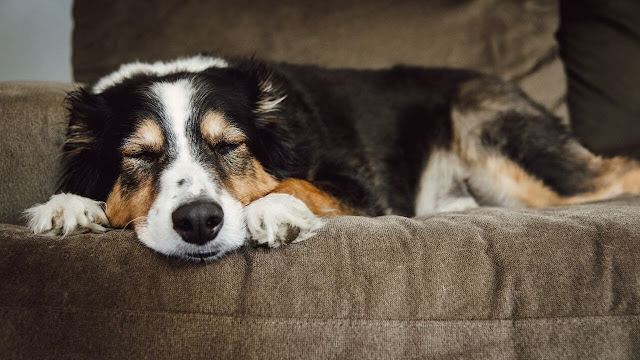 Sleep Time of Adult Dogs