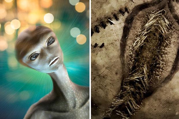 Se cree que son crías de extraterrestres de algún tipo