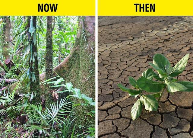 Sẽ ra sao nếu diện tích đất và nước trên Trái Đất.. hoán đổi cho nhau?