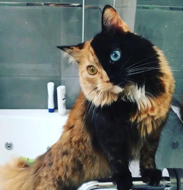 litlle cat