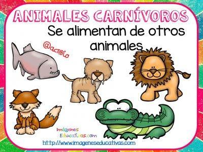 Descargar imágenes educativas de animales