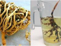 Ragam Manfaat Rumput Fatimah untuk Kesehatan