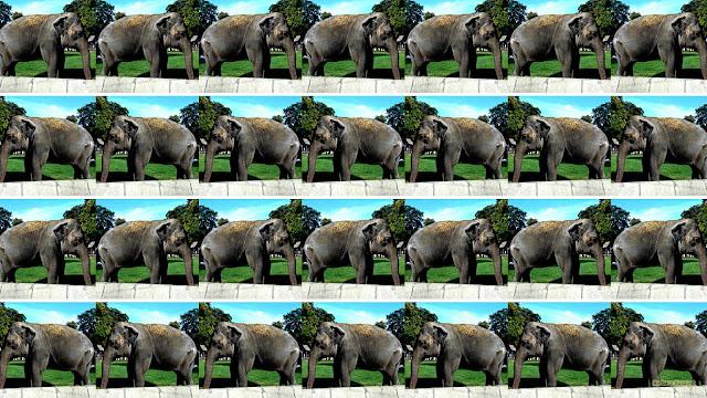 Achtergrond met afbeeldingen met een olifant