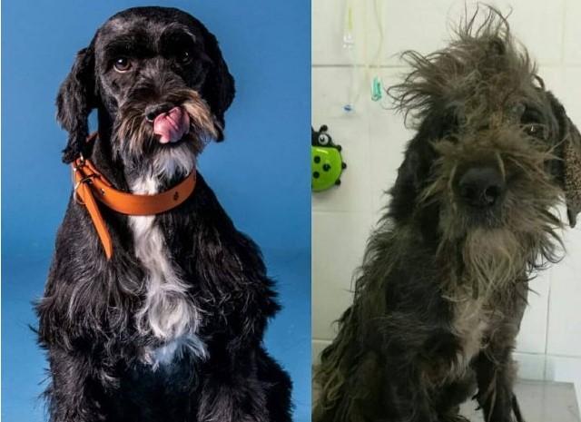 10 бездомных собак, которым добрый человек дал второй шанс