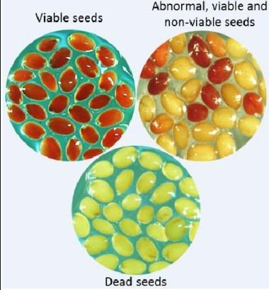 A viable seed