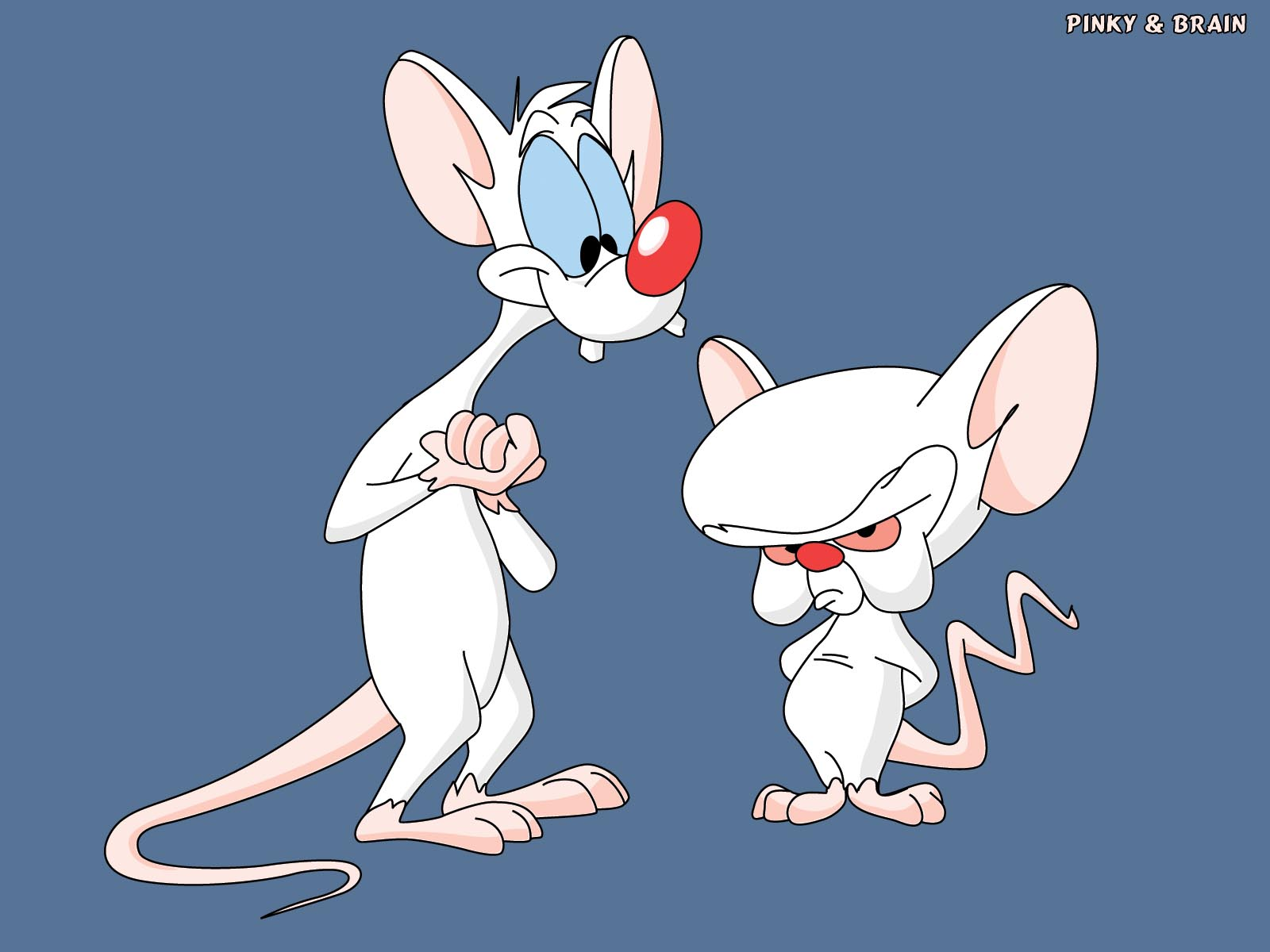 The Brain Quotes Pinky And Pinky. QuotesGram
