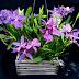 Exposição Anual de Orquídeas em homenagem as mulheres