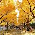 Wisata Halal Jepang Golden Route Autumn Season 2019