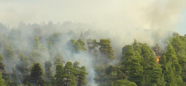 Μαίνεται Η Φωτιά στην Κασσάνδρα στην Μόλα Καλύβα -VIDEO/ΦΩΤΟ-