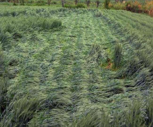 मंदसौर में दो दिन से हो रही वर्षा कई जगह ओलावृष्टि से खराब हुई फसल , आने वाले 48 घंटों में ओलावृष्टि को लेकर मौसम विभाग ने किया अलर्ट।