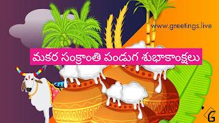 Telugu Vari Pedda Panduga Sankranti Festival HD 2018 Wishes