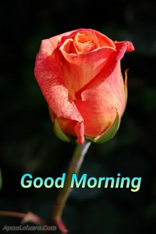 good morning images h d new, good morning images hd new, new good morning image hd