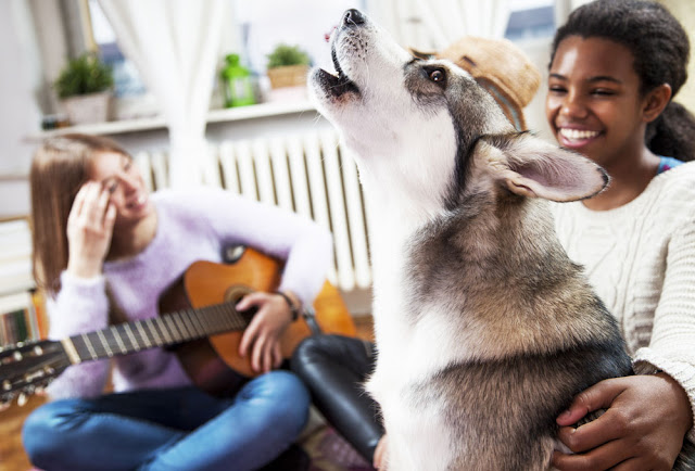 Amplify messages about positive reinforcement dog training. Photo shows husky singing with two women