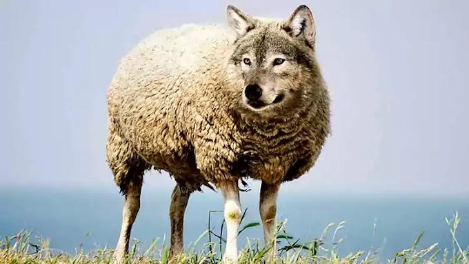 Eleições: cuidado com 'lobos em pele de cordeiro' nas redes sociais