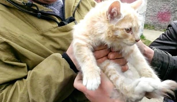 The cat that was trapped in the car spring, after rescue