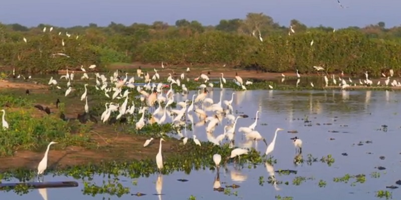 Pantanal tourist places in south america