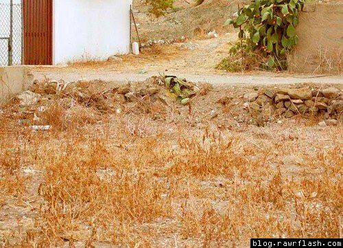 Felino escondido em frente a uma casa