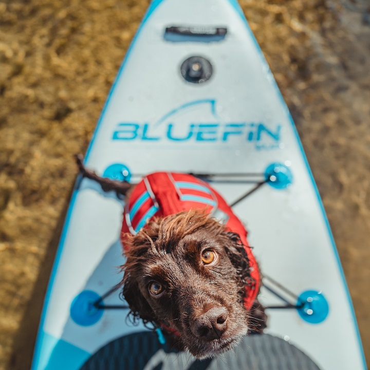 The Complete Guide to Paddle Boarding with Dogs