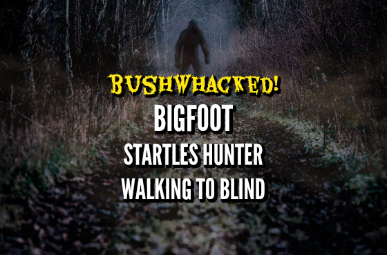 Bushwhacked! Bigfoot Startles Hunter Walking to Blind