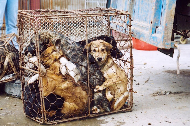 В Баку убивают и сжигают бездомных собак! Видео!