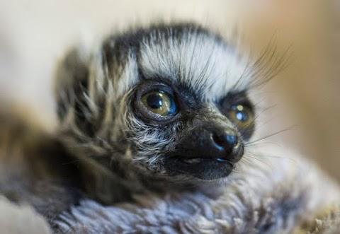 Megkezdődött Kecskeméten a háromnapos Országos Zoopedagógiai Konferencia