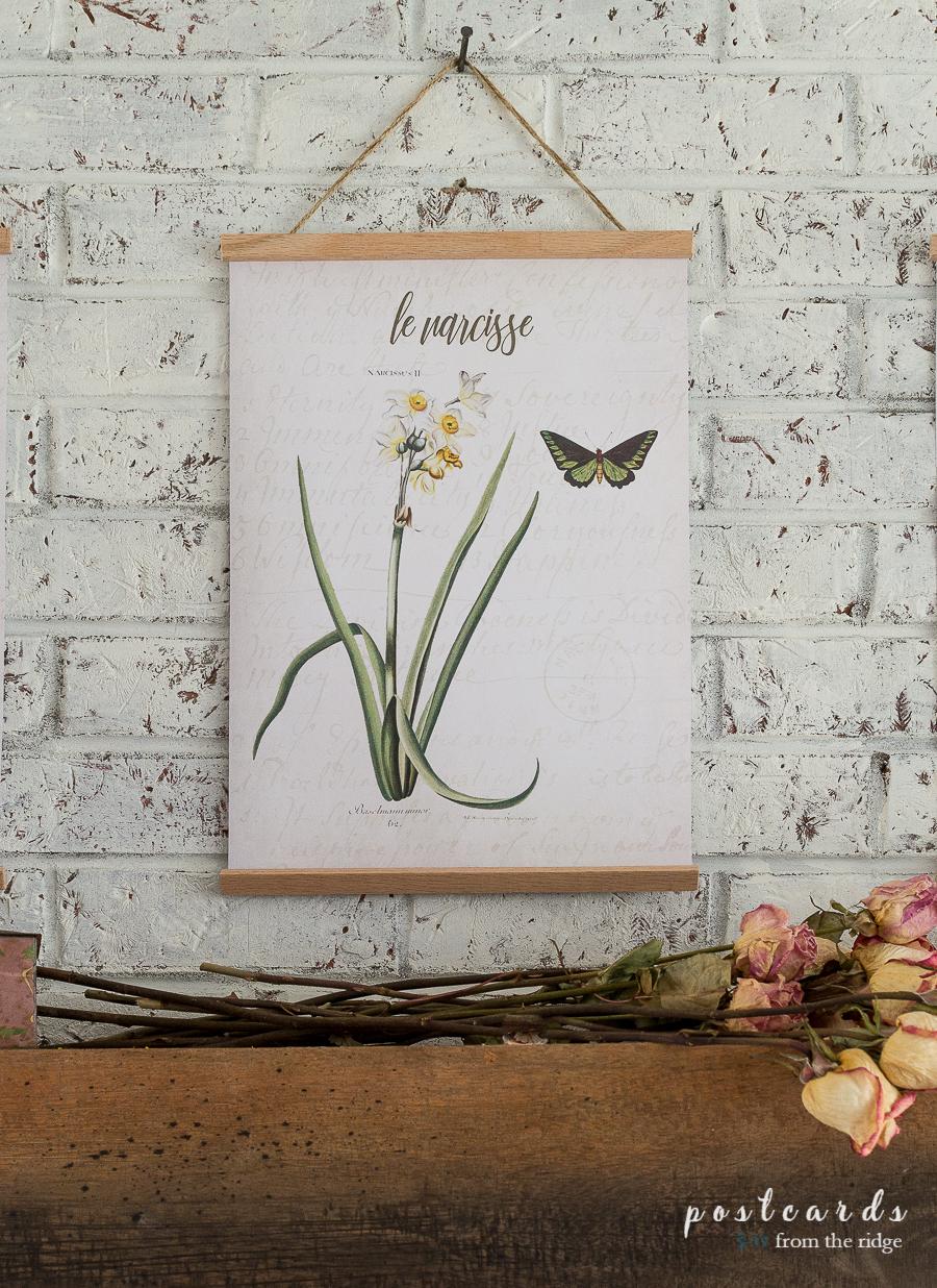 vintage narcissus botanical print