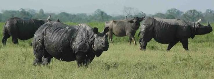 kaziranga national park wildlife sanctuaries india