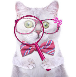 Cat With Magnifying Glass Cressida studio - Fotolia.com