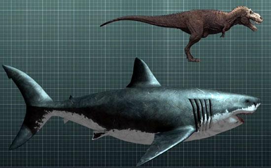 Tubarão maior que um Tiranossauro - Megalodon Img Comparacao