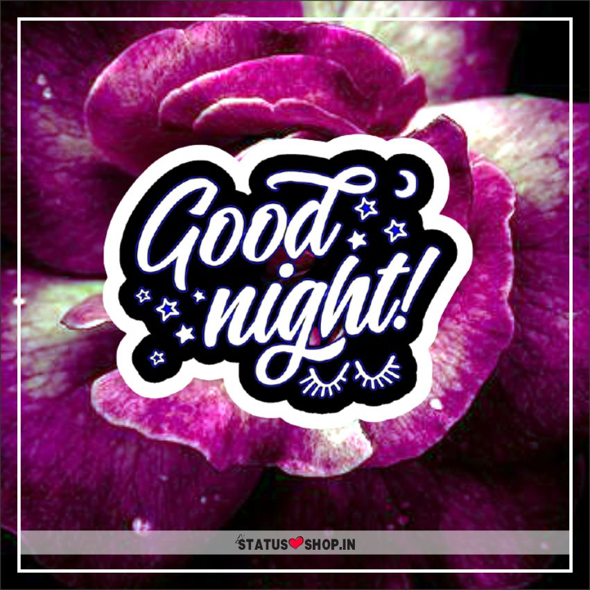 Rose-Good-Night-Images