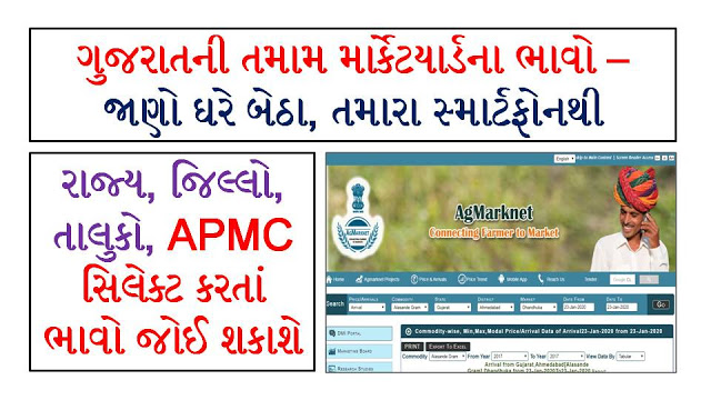 Daily APMC Market Bhav Gujarat Market Yard