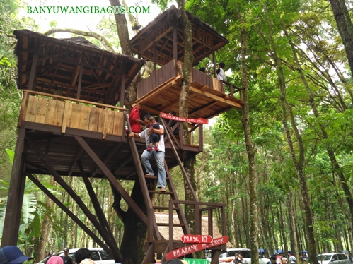 Rumah pohon di Hutan Pinus Songgon.