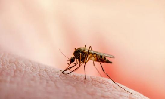 Was- was Penyakit Malaria di Tengah Pandemi