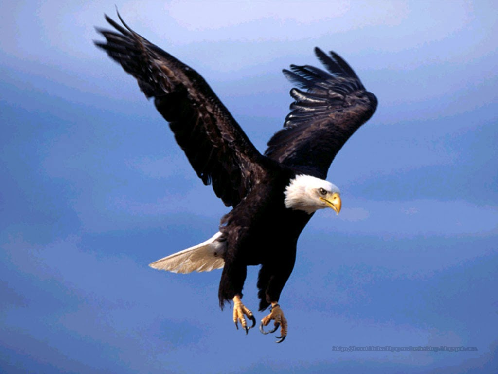 http://beautifulwallpapersfordesktop.blogspot.com/2014/01/eagle-wallpapers-hd.html