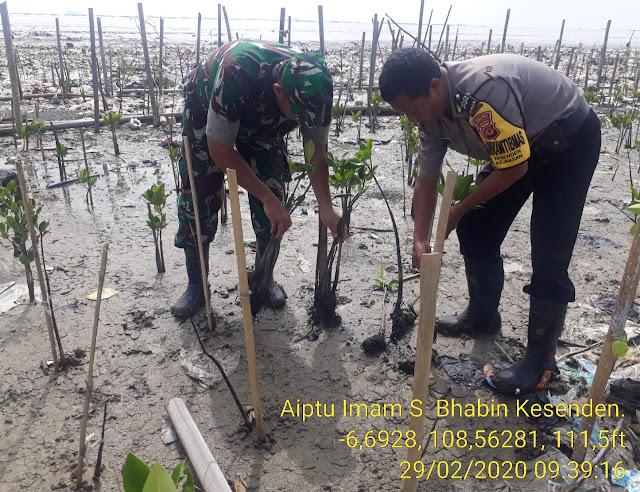 Polisi Peduli Penghijauan Aiptu Imam Bhabin Kesenden Polsek Utbar Polres CIKO Harwat Pohon Mangrov