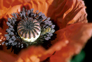 Flower and Honeybee, by Greg Schlack