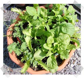 Green Salad Herbs