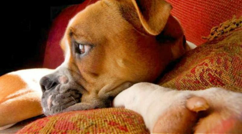 Η γαστρίτιδα του σκύλου.(Συμπτώματα-Διάγνωση-Θεραπεία)