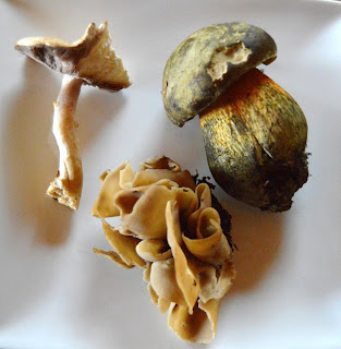 three wild mushrooms on white plate