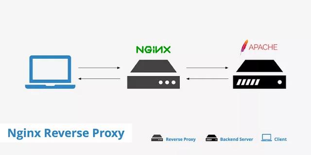 Hướng dẫn cấu hình nginx làm proxy cho docker, apache, magento 2