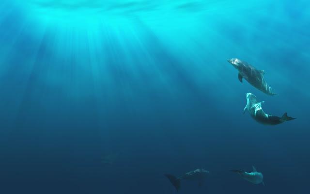 Onderwater zwemmende dolfijnen
