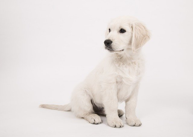 Male dog  names starting with d letter