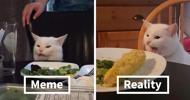 Meet Smudge: The Real-Life Cat From The  Woman Yelling At Cat Meme