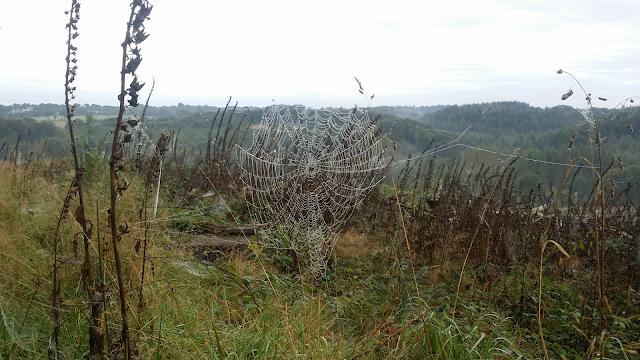 spider web, toile d'araignée