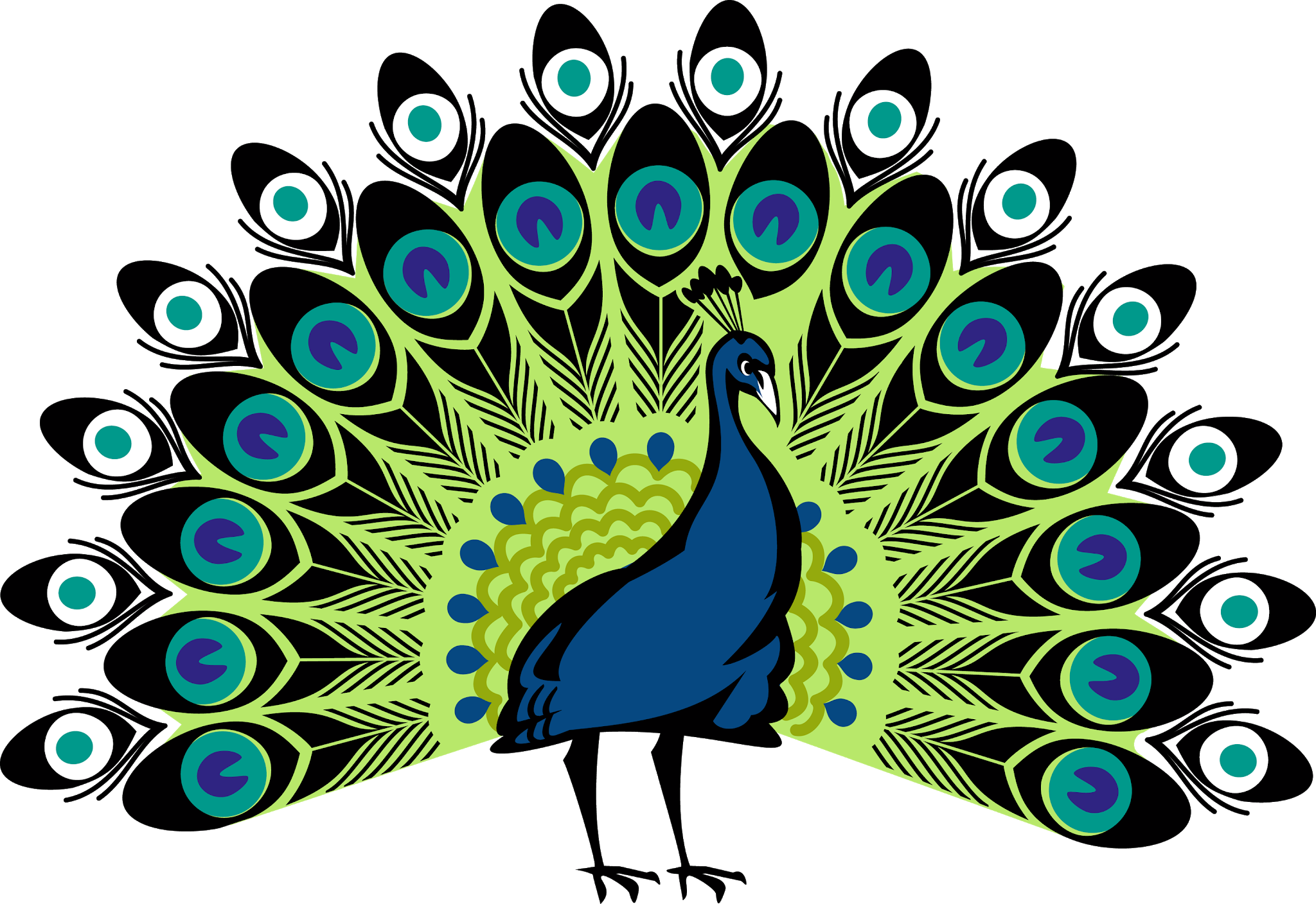 transparente png Pavo Real - Indian peafowl