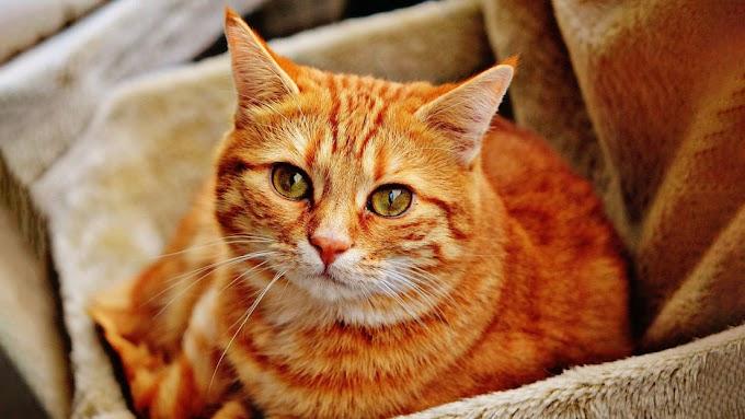 ¡Para de tomar!: una gatita se vuelve viral por impedir que su dueña tome cerveza - VIDEO