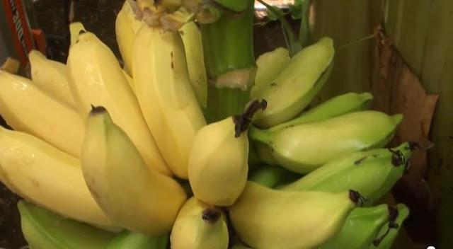 Pantangan Makanan Yang Harus Dihindari Untuk Penderita Tipes