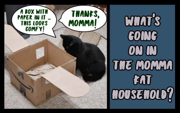 What's going on in the Momma Kat household?