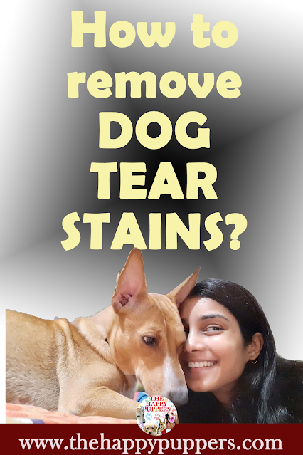 Dog tear stains- the causes, treatments and home remedies